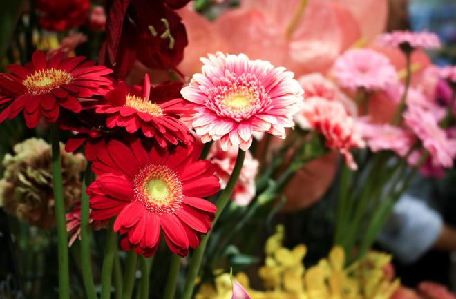 赤とピンクのかわいいお花