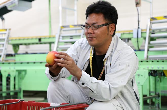 真壁さんに選果されるマンゴー