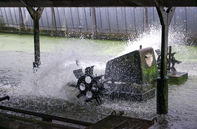 池内の水車
