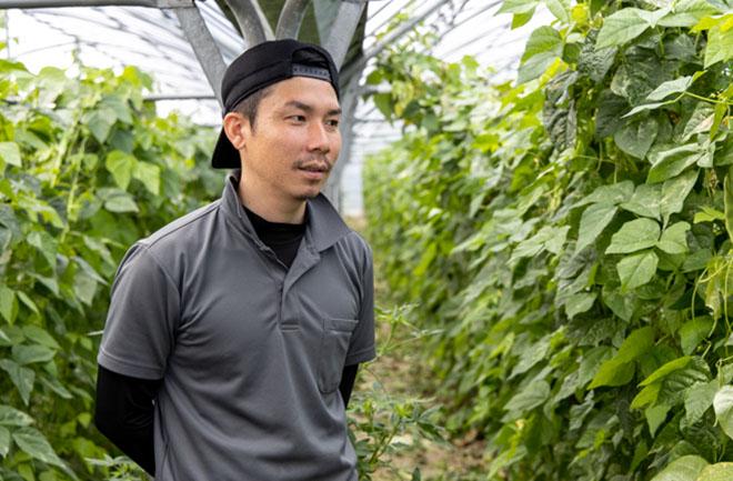 トマト畑といんげん畑の農家さん