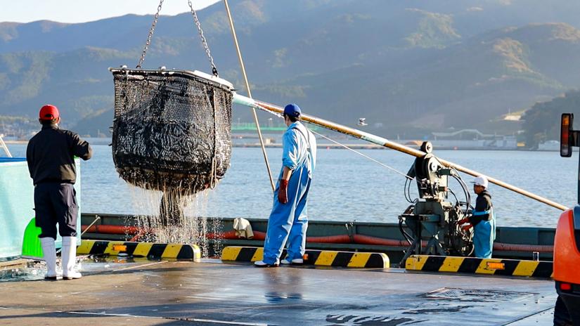 大船渡市魚市場